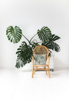 Indoor Gardening So excited to share! How to Raise a Plant and Make it Love You Back. Book written by Morgan Doane and Erin Harding of House Plant Club Monstera Deliciosa, Outdoor Plants, Air Plants, Cheese Plant, Inside Plants, Plant Aesthetic, Plantation, Green Life, Tropical Plants