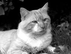 Fluffy by Loreta Tavoraite on YouPic Canon, Animals, Cannon, Animaux, Animales, Animal, Dieren