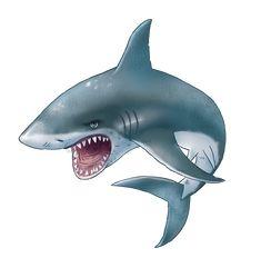Cool Sharks, Cute Shark, Shark Pictures, Baby Shark Doo Doo, Sea Illustration, Animal Categories, Shark Art, Stained Glass Paint, Tiger Art