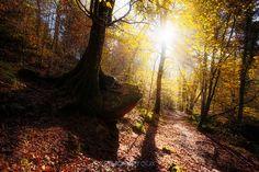 """""""Autumn delight"""" www.erwanleroux.bzh  Les températures actuelles nous plongent inexorablement vers la fin de l'automne ... l'hiver approche à grand pas et je me rends compte que je n'ai, cette année, que trop peu profité de cette belle saison aux couleurs magnifiques.  Néanmoins, je vous propose aujourd'hui une vue de la forêt de Huelgoat avec une belle lumière transperçant le feuillage encore  accroché aux branchages ... mais pour combien de temps encore ?  Bonne soirée à tous !"""