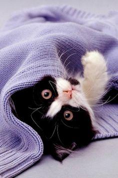 L m'a juste laissé ma pette laine et L m'a dit ne l'a perds pas je reviendrai plus...prends soin de toi reste couvert !