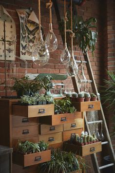 Succulents and hanging planters in vintage drawers - Michael Persico Photography