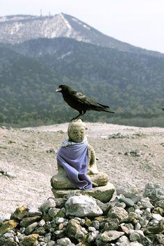 Buddha and bird. Crow Art, Raven Art, Blackbird Singing, Quoth The Raven, Little Buddha, Between Two Worlds, Jackdaw, Crows Ravens, Buddha Buddhism