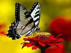 97 Mejores Imágenes De Pajaritos Y Mariposas Beautiful Birds