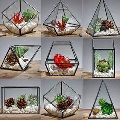 product image for Nordic Glass Terrarium - bookcase ideas, bookcase design, bookcase clipart Hanging Glass Terrarium, Air Plant Terrarium, Garden Terrarium, Glass Terrarium Ideas, Apollo Box, Glass Boxes, Cactus Flower, Flower Pots, Plant Holders