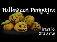 HALLOWEEN PUMPKIN HAMSTER TREATS | How To - YouTube