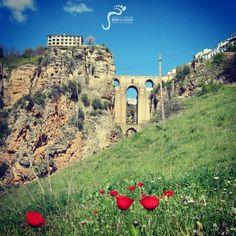 Poppies in Bloom under the Puente Nuevo in Ronda.  http://marbellaescapes.com/tours/ronda-setenil-de-las-bodegas/  #ronda #spain #poppies #andalucia #spring #bridge #travel #tours #costadel sol #marbella