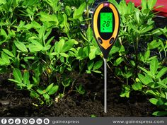 Did you know that different plants require different level of #acidity or #alkalinity? That is why it is very #important to check the #pH level of the #soil where the plants is planted. Use one of these pH meters (http://www.gainexpress.com/collections/humidity-temperature-moisture-meter/soil-ph-level-meter) for #accurate results!