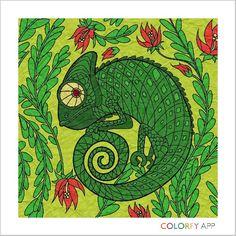 Iguana (I think)