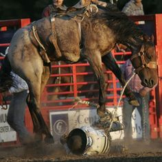 Jake Bigelow of Midvale, Idaho finds the going tough against his horse in the saddle bronc riding competition Thursday at the Eugene Pro Rodeo
