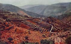 """Dufaycolor Photograph by W. Robert Moore. From """"Castles and Progress in Portugal,"""" National Geographic, February, 1938. """"Shawls of Gold Drape Hillside in the Port Wine Country When the Frost is on the Grapevine On these terraces in the valley Douro,..."""