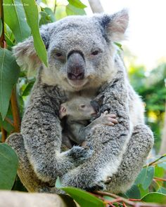 The best medicine in the world is a mother's hug..!