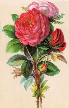 Free Vintage Clip Art - Beautiful Bouquet:    This is a lovely Victorian card with a beautifully illustrated bouquet of Roses.    Image @  http://graphicsfairy.blogspot.com/2009/07/free-vintage-clip-art-beautiful-bouquet.html