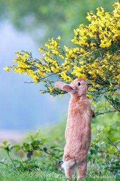 Pretty bunny enjoying a beautiful spring day!