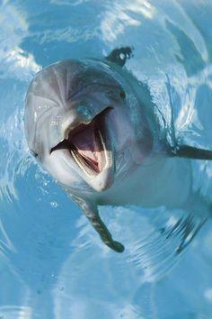 Des dauphins sauvent quatre personnes en Nouvelle-Zélande Alors qu'un Néo-Zélandais sa baignait tranquillement avec sa fille et deux de ses amies, telle ne fut pas sa surprise lorsque plusieurs dauphins les entourèrent! Faisant dans un premier temps un grand cercle autour des nageurs, les dauphins se resserrèrent, forçant ces derniers à se rapprocher les uns des autres. L'homme explique qu'il tenta de passer à travers le cercle mais qu'il fut repoussé à l'intérieur par deux dauphins, en…
