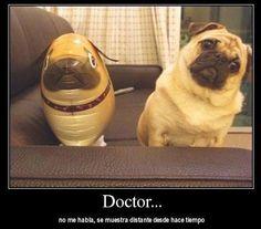 doctor no me habla se muestra distante desde hace bastante tiempo perro globo identico igual