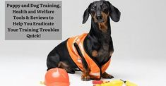 Puppy & Dog Training Tools & Reviews - fourpawpals.com Dog and puppy training recommendations Puppy Training Classes, Dog Training Tools, Dog With A Blog, Dogs And Puppies, Animals, Animales, Animaux, Animal, Animais