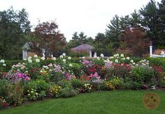 Instead of a new retaining wall, I could just create a flowerbed like this.
