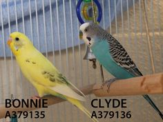Adopted! Bonnie and Clyde have found their forever home. 12/21/15