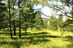 #Mongolia #nature #forest #allgreen #freshair  #momgolian #mildnature #summer #placetovisit
