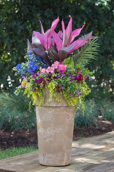 "One of the old ""rules"" of container garden design is that you should have a thriller (plant that catches the attention), a spiller (a plant that trails over the edge of the pot), and a filler (a plant that adds color and texture between the others). Here a bold pink ti plant as a thriller with a variety of colorful annuals and perennials. Pink ti plant Blue delphinium Pink snapdragon Purple calibrachoa White scaevola Asparagus fern Red dianthus Majesty palm Golden creeping Jenny"