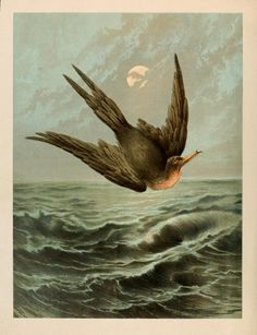 Love the ocean in this illustration as much as the bird ...