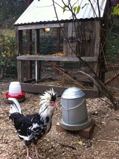 Farmyard Darlings Chicken Coop