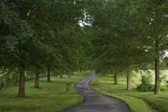 airlie country roads by woodleywonderworks, via Flickr
