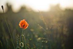 The Color of Love by Isabella  (veredit) Kramer on 500px