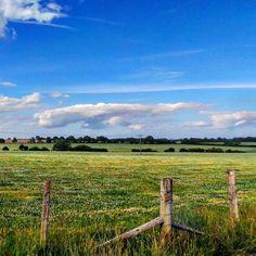 Beautiful Sussex landscape this weekend.. #view #colour #grass #nature #southeast #agriculture #bikeride #contrast #summer #sky #southdowns #nationaltrust #landscape #landmark #amazingsky #bright