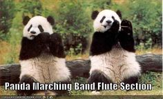 25 Hilariously Awesome Marching Band Memes | A panda marching band....what a fabulous idea!