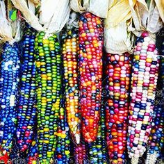 [Visit to Buy] 20 sweet rainbow corn seed,colorful vegetable seed corn grain cereals, 95%+ germination, High-Quality Vegetable for home garden #Advertisement