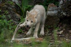 http://www.thrucharlieseyes.com/blog/2014/10/good-bones
