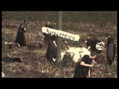 Oud filmpje van aardappeloogst in Staphorst