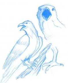how to draw a raven step 7