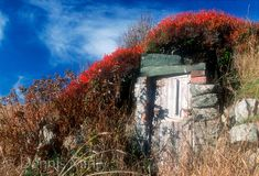 Root Cellar with Blue Berry Bushes, Twillingate, Newfoundland