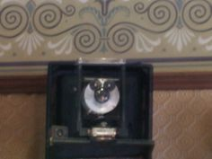 Can you see the hidden Mickey? This camera is found in the photo shop on Main Street USA. They move it around  sometimes. Look for it on your next trip to Disneyland!