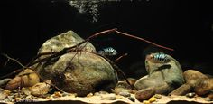 I love the simplicity of this biotope