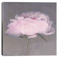 Add gallery-worthy appeal to your walls with this lovely canvas print of a pink flower by artist Erin Clark. Display it alone as an artful focal point or gro...