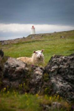 Lighthouse keeper © Claudio Büttler @ 500px — in Iceland.