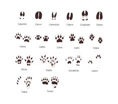 Free printable animal tracks cards. Kids will love trying
