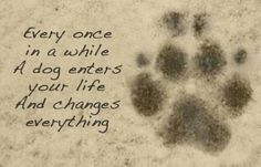 Every once in a while a dog enters your life and changes everything!