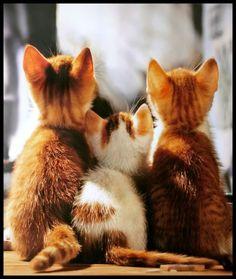 three sweet kittens