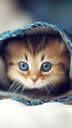 Dozens of Cute Cats and Kittens - I Can Has Cheezburger? and kittens Cute Little Kittens, Cute Cats And Kittens, Kittens Cutest, Cutest Cats Ever, Beautiful Kittens, Animals Beautiful, Beautiful Eyes, Pretty Eyes, Animals Amazing