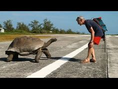 Explorer Interrupts Mating Tortoises, Slowest Chase Ever Ensues | 1Funny.com