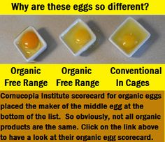 Which Eggs are the Best - pastured, organic free range, conventional...?
