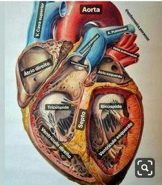 Medicine Notes, Medicine Student, Basic Anatomy And Physiology, Studying Medicine, Nursing School Notes, Human Body Anatomy, Medical Anatomy, Med Student, Pharmacology