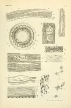 The anatomy and histology of the human eyeball in the normal state, its development and senescence ; (1912)