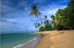 Toco Beach, Trinidad: Prachtige afgelegen baaien, mooie koraalriffen en een frisgroen regenwoud vormen het sprookjesachtige kader voor een onvergetelijke droomvakantie.