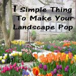1 simple thing that makes your landscape pop